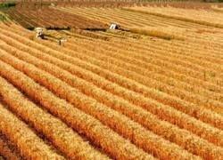 Иран закупит в РФ крупную партию зерна
