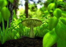 Ученые мечтают сделать лекарство из галлюциногенных грибов