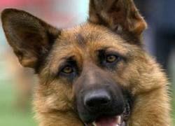 Почему люди предпочитают дружить с собаками?