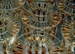 Школьный учебник по нанотехнологиям появится к ноябрю
