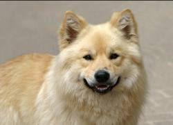 Проведено первое коммерческое клонирование домашней собаки