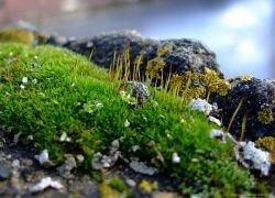В Антарктике найден древний мох и насекомые
