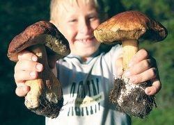 Что делать, чтобы грибы не превратились в отраву