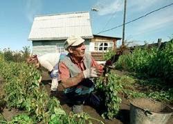Садоводства превратят в муниципальные жилые поселки