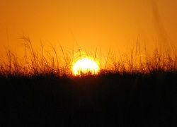 Солнечные альтернативы энергетики