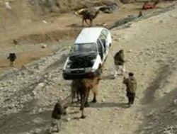 Верблюд - эвакуатор пустыни