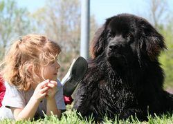 У собаководов появилась собственная социальная сеть