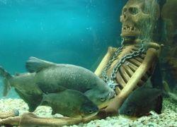 Английский рыболов завещал скормить себя рыбам