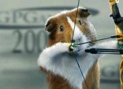 Морские свинки в большом спорте
