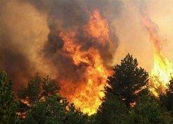 Во Франции из-за взрыва снаряда сгорели 40 га леса
