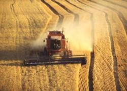 Минсельхоз обещает рекордный урожай зерна за последние 15 лет