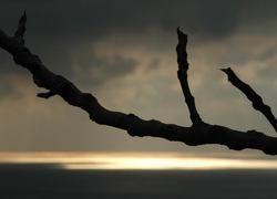 Ученые могут управлять ростом веток деревьев
