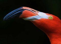 Яркие краски в животном мире