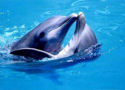 Дельфины находятся на грани вымирания