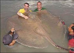 Американский биолог охотится за гигантской рыбой
