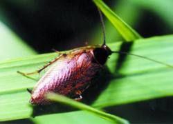 Лекарственные растения можно обнаружить с помощью жуков