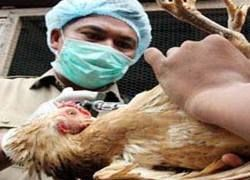 Птичий грипп можно будет выявить за 2 часа