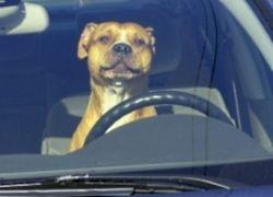 Как сберечь автомобиль и себя любимого в жару?