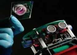 Создан робот с мозгами крысы