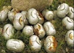 Генштаб: кассетные бомбы при бомбардировках Грузии не использовались