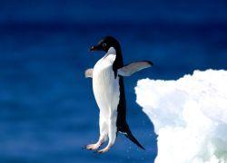 Король Норвегии посвятил пингвина в рыцари