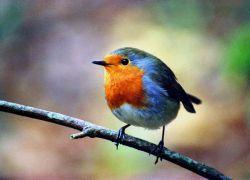 В Африке найден новый вид птиц