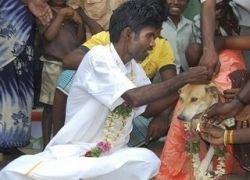 Брак по расчету: индиец женился на собаке