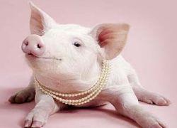 Женщины Иллинойса состязаются в брачных криках свиней