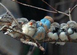 Птицы со сложной песней лучше добывают еду