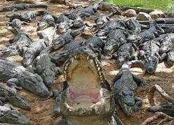 В Мексике крокодилы разорвали залезшего в вольер алкоголика