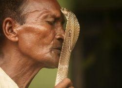 Фестиваль заклинателей змей