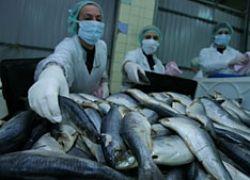 Рыбу в море разделят между промышленниками на десять лет вперед