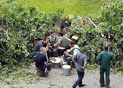 В столице участились случаи незаконных порубок деревьев