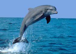 Дельфин научил собратьев стоять на хвосте