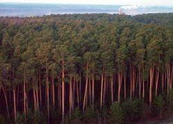 ФАС просит суд отменить итоги лесных аукционов в Подмосковье