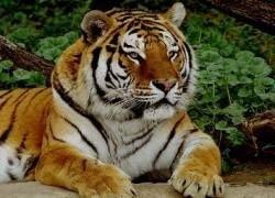 Во время шторма из флоридского зоопарка сбежали лев и тигр