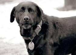 Собаки понимают, что такое хорошо, а что такое плохо