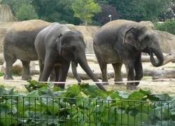 Доказано, что слоны умеют считать