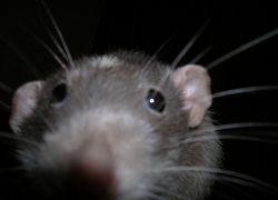 Животные чувствуют запах опасности