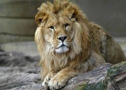 Борцы за свободу животных хотят выкупить зоопарк