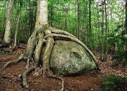 Самые жуткие деревья на Земле
