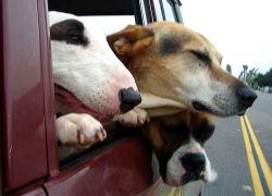Заводчик лишился тысячи собак