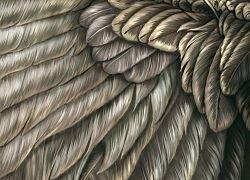 Ученые создали строительный материал из птичьих перьев