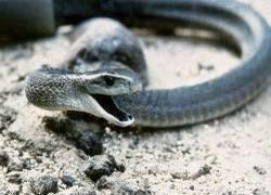 Житель Токио держал дома более 50 ядовитых змей