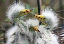 10 интересных фактов о животных