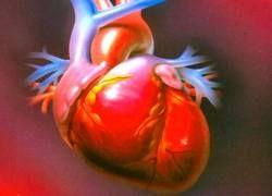 9 советов для здоровья сердца