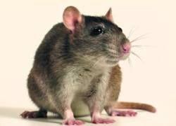 Ученые нашли аутизм у мышей
