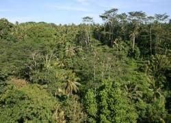 """В джунглях обнаружен \""""повелитель мух\"""", провисевший там 66 лет"""