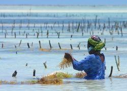 Морские водоросли останавливают развитие рака