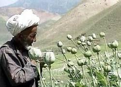Лавина наркотиков захлестнула Среднюю Азию